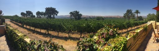 Las Positas Vineyard